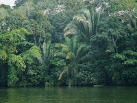 Rain Forest Landscape